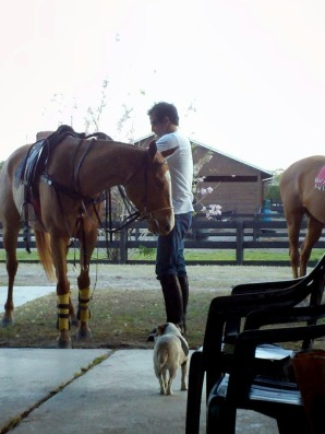 clone horse,lucas and manuelita