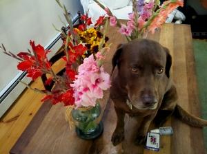 Flowers Gladiolus